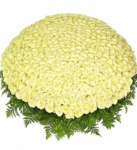 1001 Белая Роза (50/60 см.)