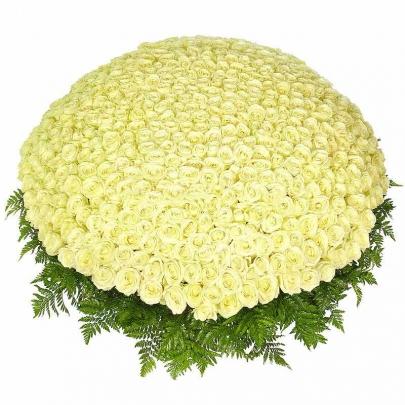 1001 Белая Роза (50 см.) фото