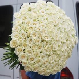 101 Белая Роза (70 см.) фото