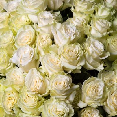 101 Белая Роза (100 см.) фото