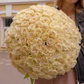 101 Белая Роза Эквадор (50/60 см.) фото