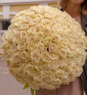 101 Белая Роза (60 см.)