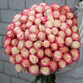 99 Бело-Розовых Роз (50/60 см.) фото