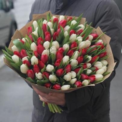 101 Белый и Красный Тюльпан фото