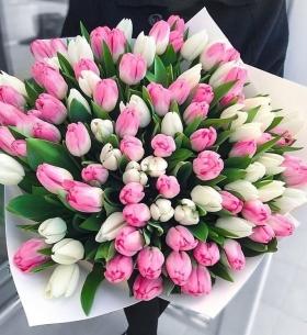 101 Белый и Розовый Тюльпан в пленке фото