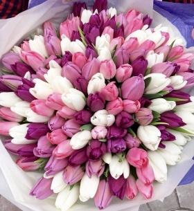 101 Белый и Сиреневый Тюльпан в пленке фото