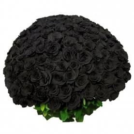 101 Черная Роза (70/80 см.)