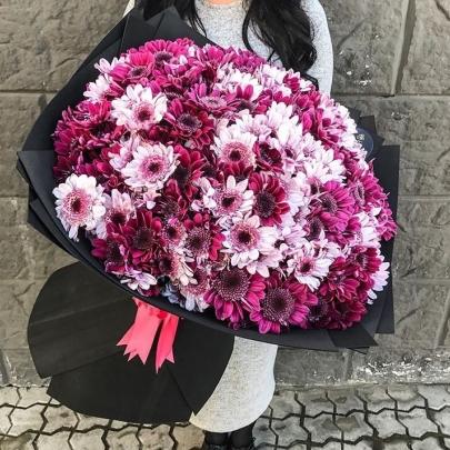 101 Малинова и Розовая Кустовая Хризантема фото