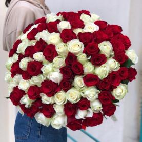 101 Красная и Белая Роза (60 см.) фото