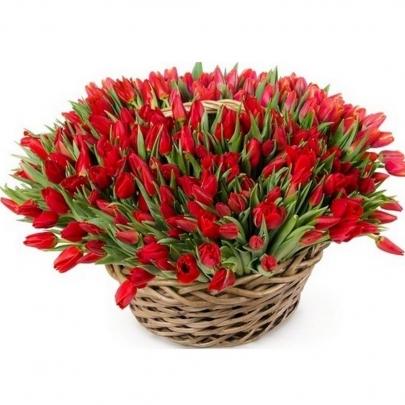 101 Красный Тюльпан в корзине фото