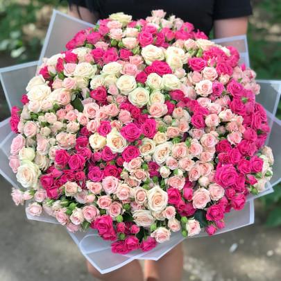 101 Кустовая Малиновая и Розовая Роза (50 см.) фото