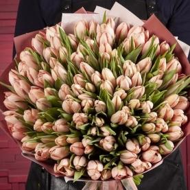 101 Нежно-Розовый Тюльпан в пленке фото