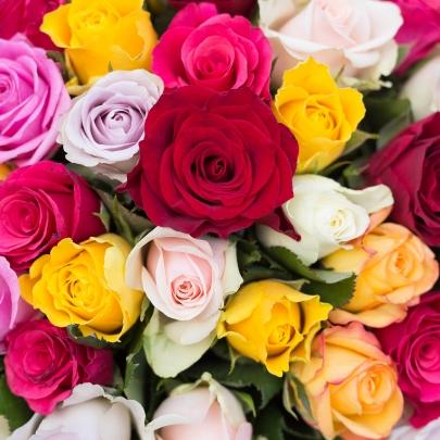101 Разноцветная Роза фото