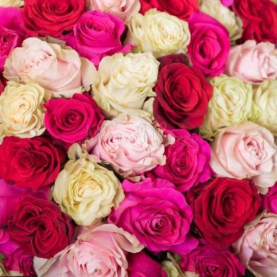 101 Разноцветная Роза Эквадор (60 см.) фото
