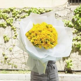 101 Желтая Фрезия фото