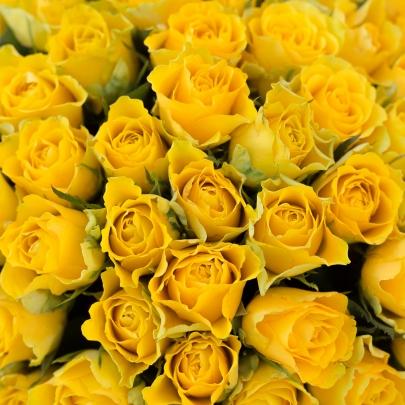 101 Желтая роза  фото