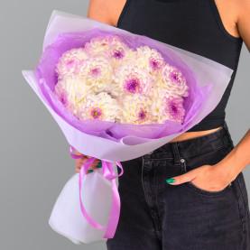 11 Бело-Фиолетовых Георгинов фото