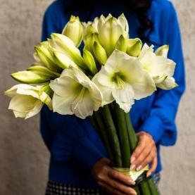11 Белых Амариллисов фото