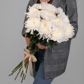 11 Белых Хризантем Бигуди фото