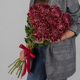 11 Бордовых Хризантем Бигуди фото