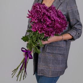 11 Фиолетовых Хризантем Бигуди фото