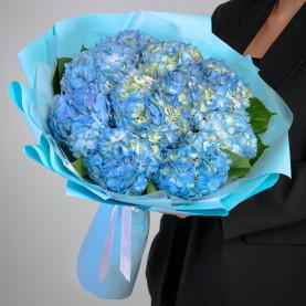 11 Голубых Гортензий фото