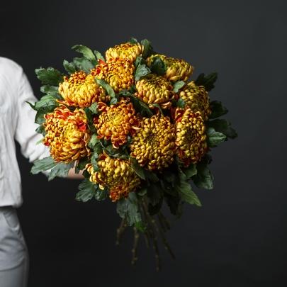 11 Шоколадных Хризантем фото