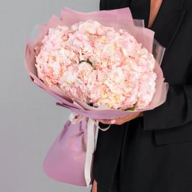 11 Розовых Гортензий фото