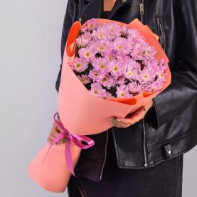 11 Розовых Кустовых Хризантем фото