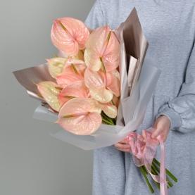 11 Розовых Антуриумов фото