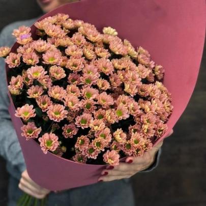 11 Рыжих Хризантем Сантини фото