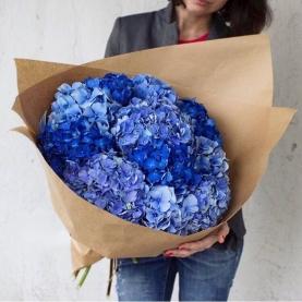 11 Синих и Голубых Гортензий фото