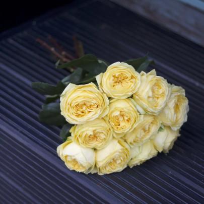 11 Пионовидных Желтых Роз (50 см.) фото