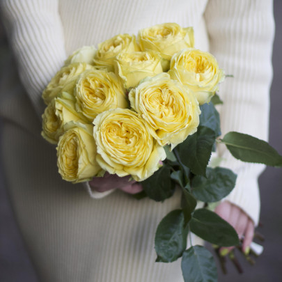 11 Желтых Роз Эквадор (50/60 см.) фото