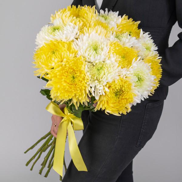 15 Бело-Желтых Игольчатых Хризантем