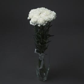15 Белых Гвоздик фото
