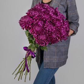 15 Фиолетовых Хризантем Бигуди фото