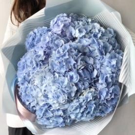 15 Голубых Гортензий фото