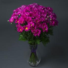 15 Фиолетовых Хризантем Кустовых фото
