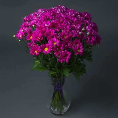 15 Хризантем Фиолетовых Кустовых фото