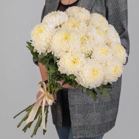 15 Кремовых Хризантем Бигуди фото