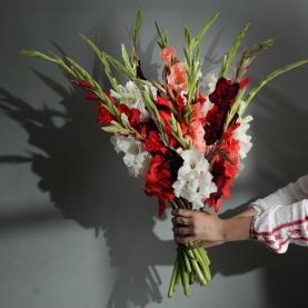 15 Красных и Белых Гладиолусов фото
