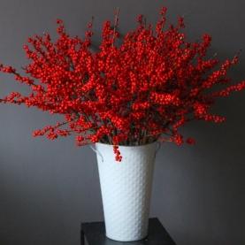 15 Красных Илексов фото