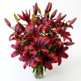 15 Красных Лилий фото