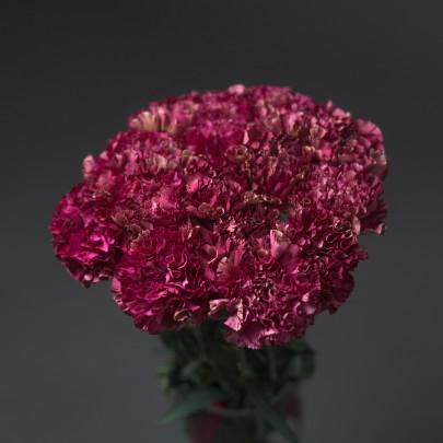 15 Фиолетовых Гвоздик фото
