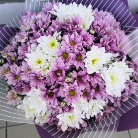 15 Бело-Розовых Кустовых Хризантем фото