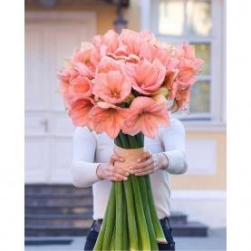 15 Розовых Амариллисов фото