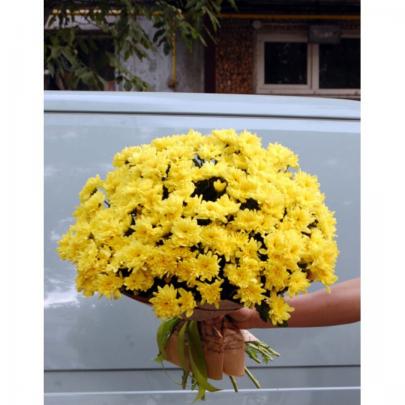15 Желтых Хризантем фото
