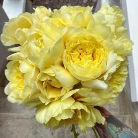 15 Желтых Пионов фото