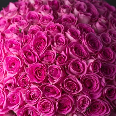 151 Розовая Роза фото